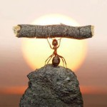 ant with wood lifting funny pictures