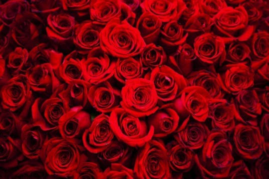 Red-Roses-