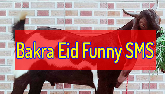 most funny bakra eid jokes sms & text messeges